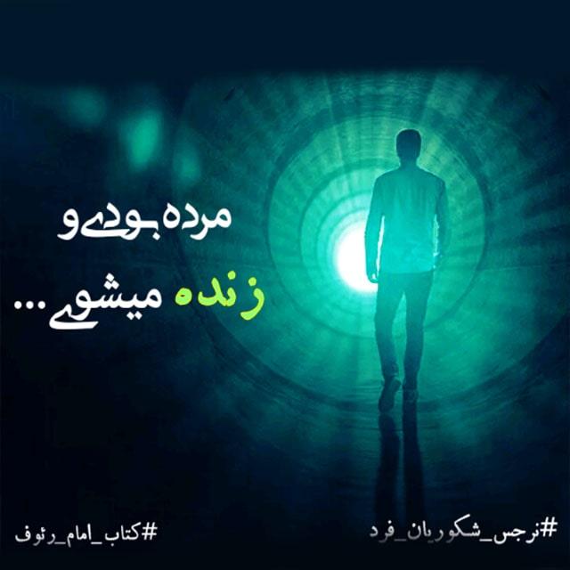زنده شدن-حرم امام رضا-کتاب امام رئوف